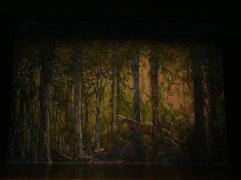 McCoy/Rigby Productions: Peter Pan, Neverland Jungle drop. John Iacovelli designer